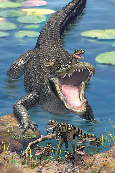 Gators Postcard