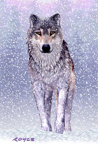 Wolves Flip Postcard